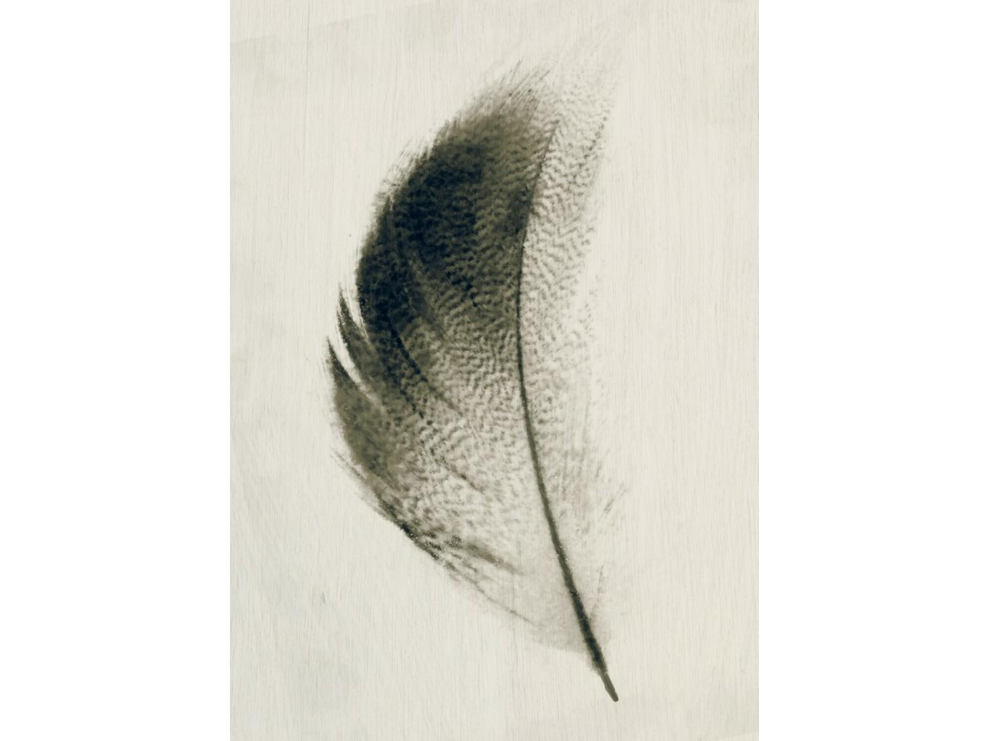 DekorDom Slika 60x90cm Toir25375 - Feather