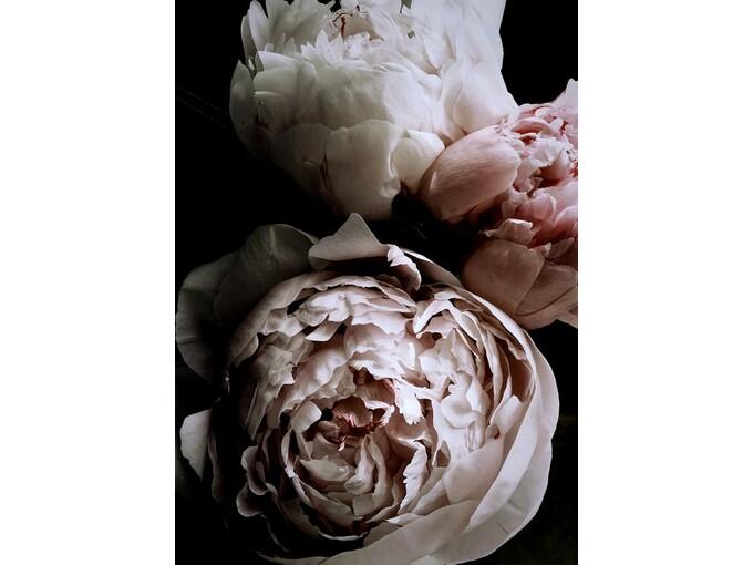 DekorDom Slika 80x120cm Toir25455 - Rose