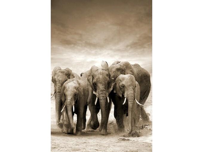 DekorDom Slika 80x120cm Toir21117 - Elephants