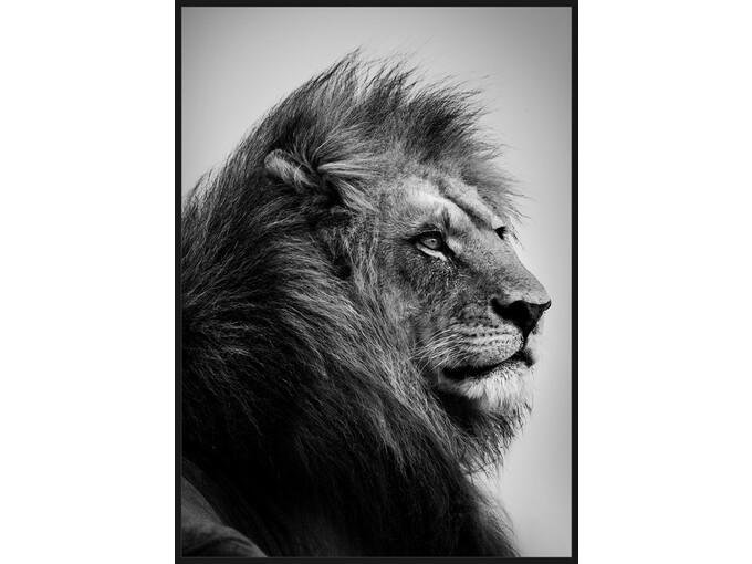 DekorDom Slika sa ramom 60x90cm Toir25626 - Lion